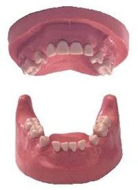 Surgery and implantology Teeth and Study Models